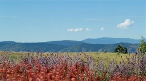 Beautiful native landscape at BackCountry in Highlands Ranch Coloraod