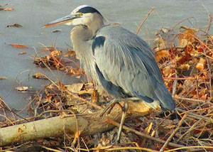 Hudson Gardens Bird Tour