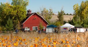 pumpkin festival colorado fall